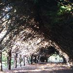 A shaded path leading to the house.