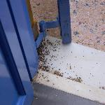 Patio doors with dead ants not cleaned up