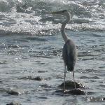 A stork at Parali1 island