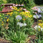 Escape in the beautiful garden at Americus Garden Inn