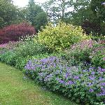 Lovely herbaceous borders