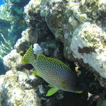 Fish at the local reef
