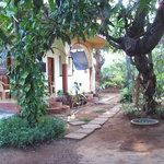 Anjunapalms garden yard