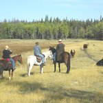 Riders often come upon range cattle