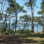 Arcachon - Vue sur le Bassin depuis le Parc Pereire