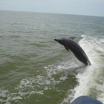 Dolphin jumping behind our boat - 10,000 Islands tour