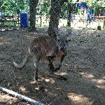 The kangaroo was awesome.