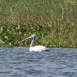 un des oiseaux de la réserve