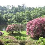 Ballyn Garden