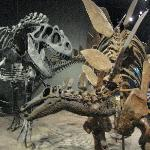 Dinosaur exhibits are at the museum