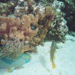 Diving / Snorkeling the Reef