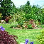 Tranquil back garden