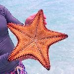 Big Starfish