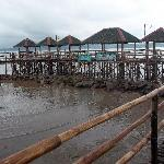 The Bamboo Boardwalk 2