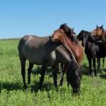 Spanish Horses at the Black Hills Wild Horse Sanctuaty
