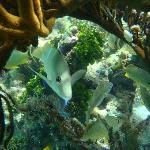 el mejor snorkeling del mundo