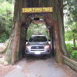 Tour-Through Tree