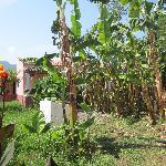 Tassos apartments gardens