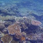 BLBR Reef