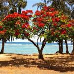 DIMITILE HOTEL flamboyant ile de La Reunion