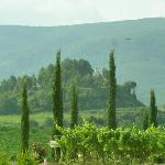 View from front of one of the vineyards