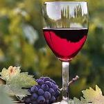 Wine Tours + Tastings