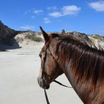 Horse Riding Grootbos Private Nature Reserve