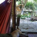 Private hammock and friendly dog