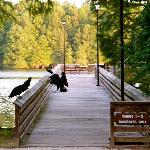 Santee State Park, SC/Lake Marion