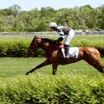 SteepleChase photos from the weekend