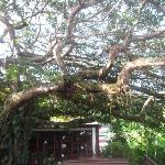 Cool tree in the main area