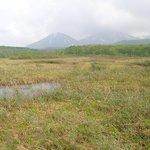 湿原の向こうには八甲田山