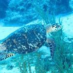 Saw lots of turtles