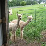 Foto di Columbia Creek Farm