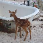 Now tell me that baby deer isn't cute! :-)