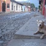 El Perito hanging on the corner