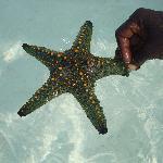 Solche Schätze gibt es im Meer