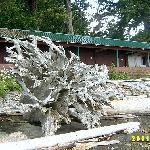 Bleached Treeroot with Barracks Behind