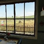 View of the sheep from the breakfast room