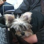 Hund in Tragetasche
