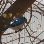Blue Jays Trailside