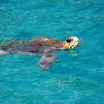 The turtle we saw in the sea