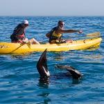 Seals often visit us on our kayak tours.