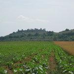 Chianti Wine Region