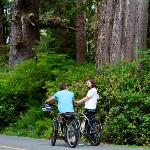 Beach Cruisers & Ancient Cedars