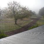 view from window in the morning mist