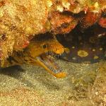 Foto de Safari Diving Lanzarote