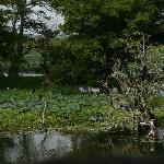 Парк и озеро