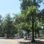 Lindenhofplatz