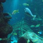 Large underwater tank